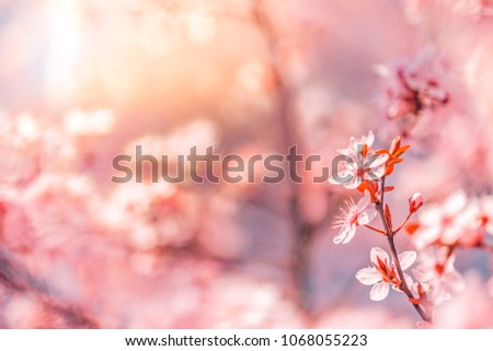 Beautiful floral spring abstract background of nature. Blossoming nature close-up soft focus on gentle light blue sky background. #1068055223
