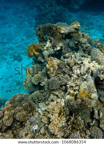 Corals and fish in the red sea #1068086354
