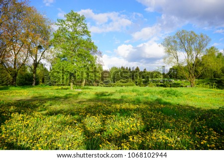 Spring park - flowering dandelion - beautiful green areas of the city #1068102944