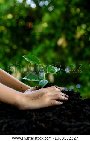 Little child hands take care and plant young seedling on a black soil. Earth day concept. #1068152327