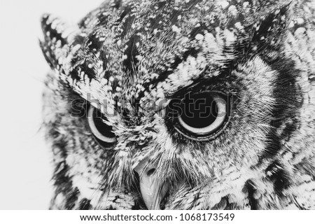 """The bureaucratic owl, also called field-buckthorn, field owl, owl-owl, buck-owl, owl-owl, guede, urucura, urucurian and urucuriá, is called """"buraqueira"""" in holes dug in the ground"""