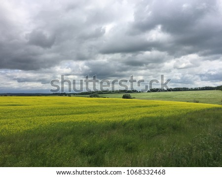 Green field and grey sky #1068332468