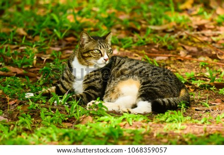 a cat resting on a grass patch #1068359057