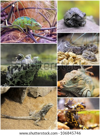 pictures of reptiles and amphibians in terrariums #106845746