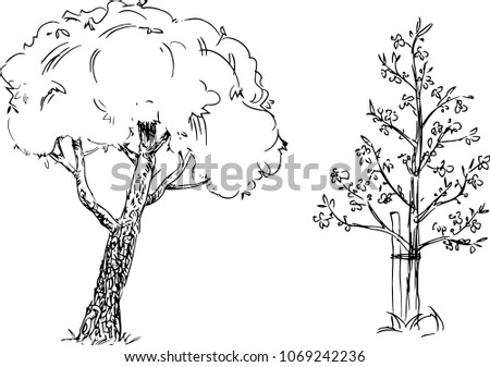Hand drawn trees isolated, graphic sketch   style trees set #1069242236