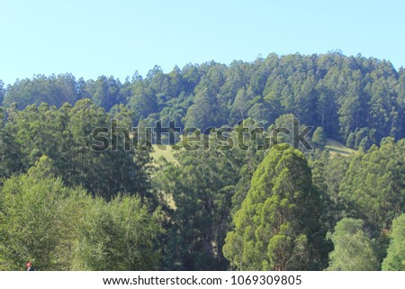 beautiful trees and landscape in Victoria #1069309805