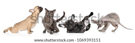 Group of cats and dogs in yoga poses on white background yoga aerobics dancing. Animal themes #1069393151