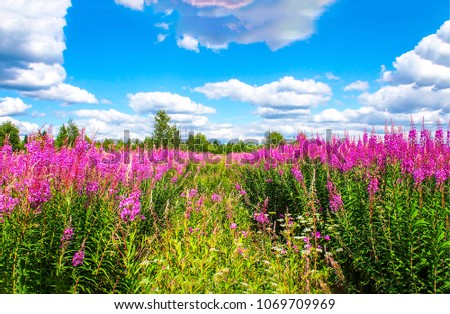 Summer meadow pink flowers landscape. Meadow with pink flowers. Meadoq summer pink flowers scene #1069709969