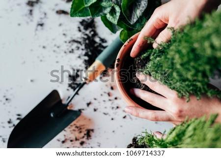 Woman's hands transplanting plant a into a new pot. #1069714337