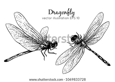 Hand drawings dragonfly. Black and white with line art vector illustration.