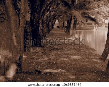 Autumn Walkway between trees and river. #1069851464