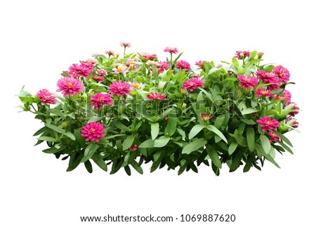 flower bush tree isolated with clipping path #1069887620