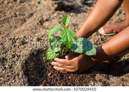 hand holding plant with nature background, save the world and World Environment Day concept at sunny day. subject is blurred. #1070028410
