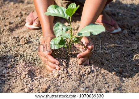 hand holding plant with nature background, save the world and World Environment Day concept at sunny day. subject is blurred. #1070039330