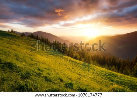 Flowes in the mountains during sunrise. Beautiful natural landscape in the summer time #1070174777
