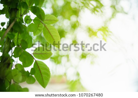 Closeup nature view of green leaf on blurred greenery background in garden at morning sunlight with copy space using as background natural green plants landscape, ecology, fresh wallpaper concept. #1070267480