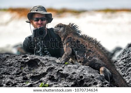 Galapagos Iguana and tourist nature wildlife photographer taking picture. Marine Iguana shaking and bobbing its head showing threat and dominance. Marine iguana on Isabela, Galapagos Islands, Ecuador