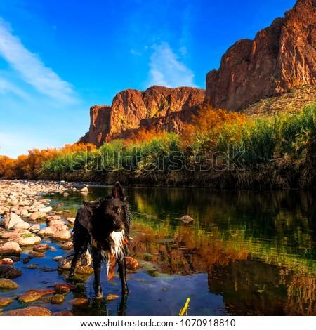Dog in Arizona river #1070918810