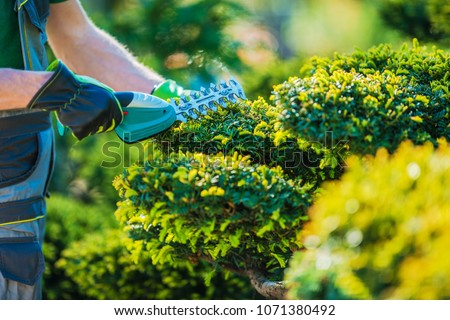 Plants Topiary Trimming by Cordless Trimmer. Closeup Photo. Professional Gardening Theme. #1071380492