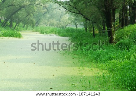 Scenery with forest and water plants #107141243