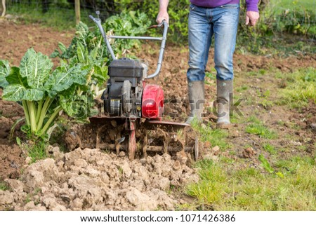 senior farmer gardener working in the garden with rototiller , tiller tractor, cutivator, miiling machine. Permaculture #1071426386
