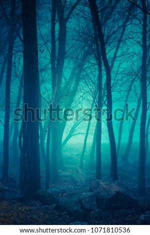 Misty forest. Autumn nature foggy landscape #1071810536