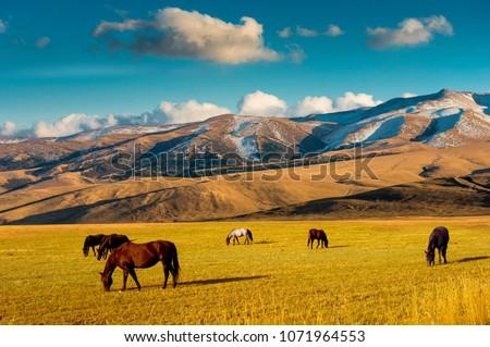 Horses on a pasture, near Almaty city, Kazakhstan