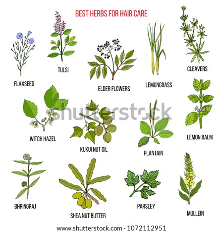 Best medicinal herbs for hair care. Vector hand-drawn collection #1072112951