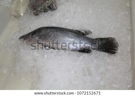 fish a limbless cold-blooded vertebrate animal with gills and fins and living wholly in water. #1072152671