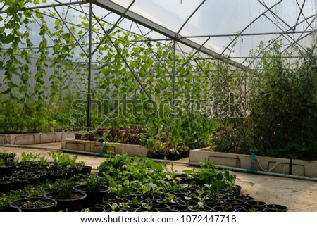 Urban Farming / Organic Farming for safe food #1072447718