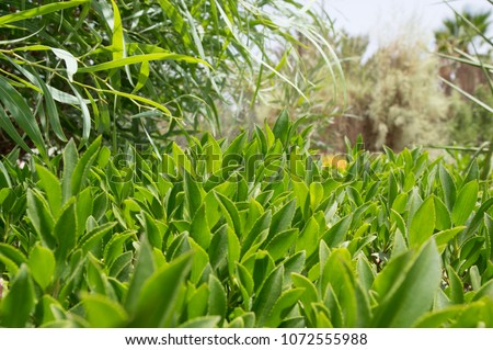 green leaves of plants #1072555988