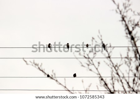 Silhuetts of birds sitting on cords in the cloudy grey sky, branches of spring tree with buds. Monochrome colors. Minimalism. Concept for card or interior picture, modern simple style, nature theme