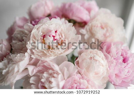 Cute and lovely peony. many layered petals. Bunch pale pink peonies flowers light gray background. Wallpaper, Vertical photo