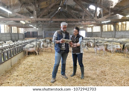 Sheep breeder with veterinary in shed using digital tablet #1072942703