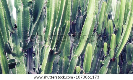 Green cactus background #1073061173