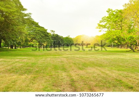 Trees in a park is an attraction public in summer season at the morning scene among city urbanization #1073265677