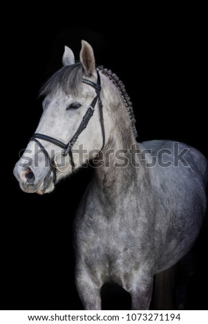 Grey horse on a black background #1073271194