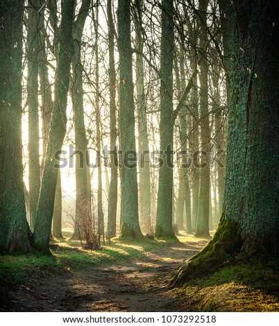 beautiful sunny forest and path leading trough the forest #1073292518