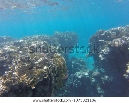 red sea coral reef fish blue water #1073321186
