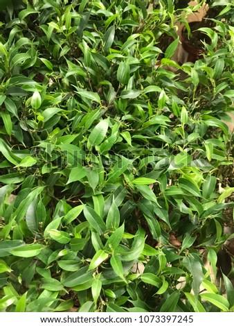 spring green leaves #1073397245