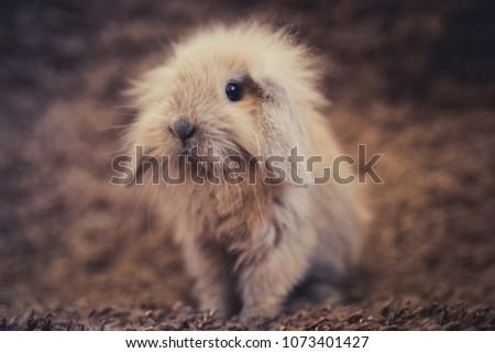 Studio shot of domestic rabbit on gray background #1073401427