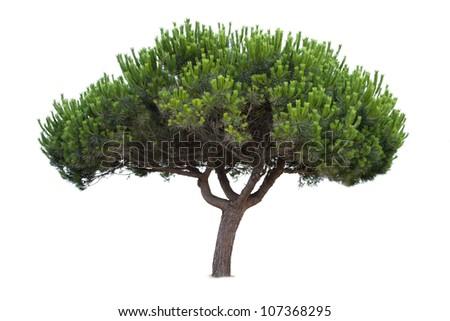 lush green tree isolated on white background #107368295