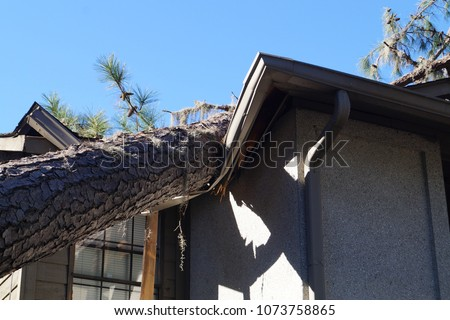 Roof damage from tree that fell over during hurricane storm  Royalty-Free Stock Photo #1073758865
