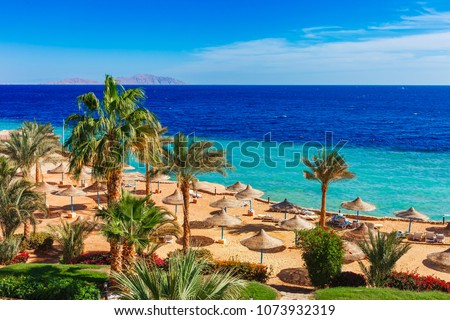 Sunny resort beach with palm tree at the coast shore of Red Sea in Sharm el Sheikh, Sinai, Egypt, Asia in summer hot. Bright sunny light #1073932319
