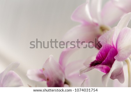 Floral background -  Orchid