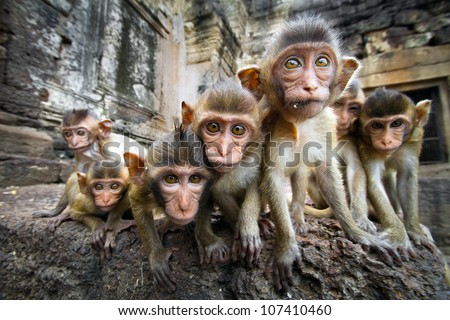 Baby monkeys are curious,Lopburi, Thailand. #107410460