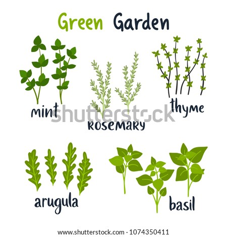 Set of vector illustration herbs with lettering. Green growing basil, rosemary, thyme, mint, arugula. Gardening. For your design. #1074350411