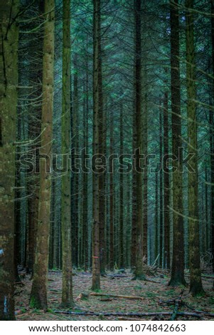 Pine tree in the forest #1074842663