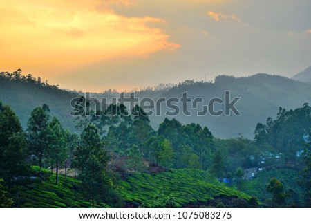 Sunset in munnar with hills in the background. #1075083275