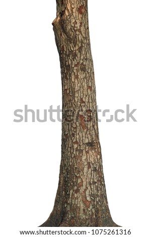 Tree trunk isolated on white background. This has clipping path. #1075261316